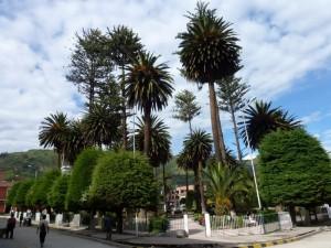 Park, Socrata