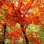 Beautiful foliage colours in Toronto