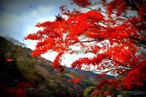 Arashiyama, November 27, 2014