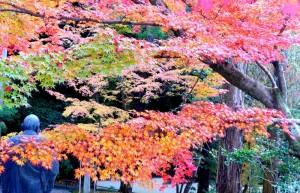 Imakumano-Kannonji Temple, November 28, 2014