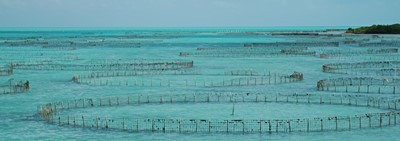 Conch Farm