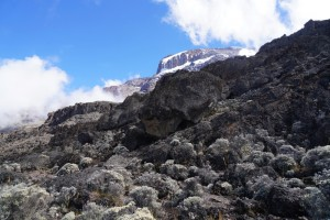 View of Kilimanjaro from below